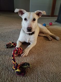 Beatrice-Adopted