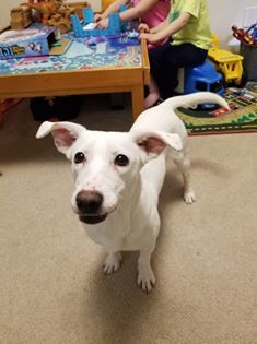 Beatrice-Adopted 2