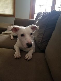 Beatrice-Adopted 3