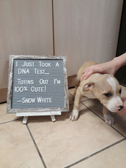 SNOW WHITE, an adopted Mixed Breed in Cape Girardeau, MO