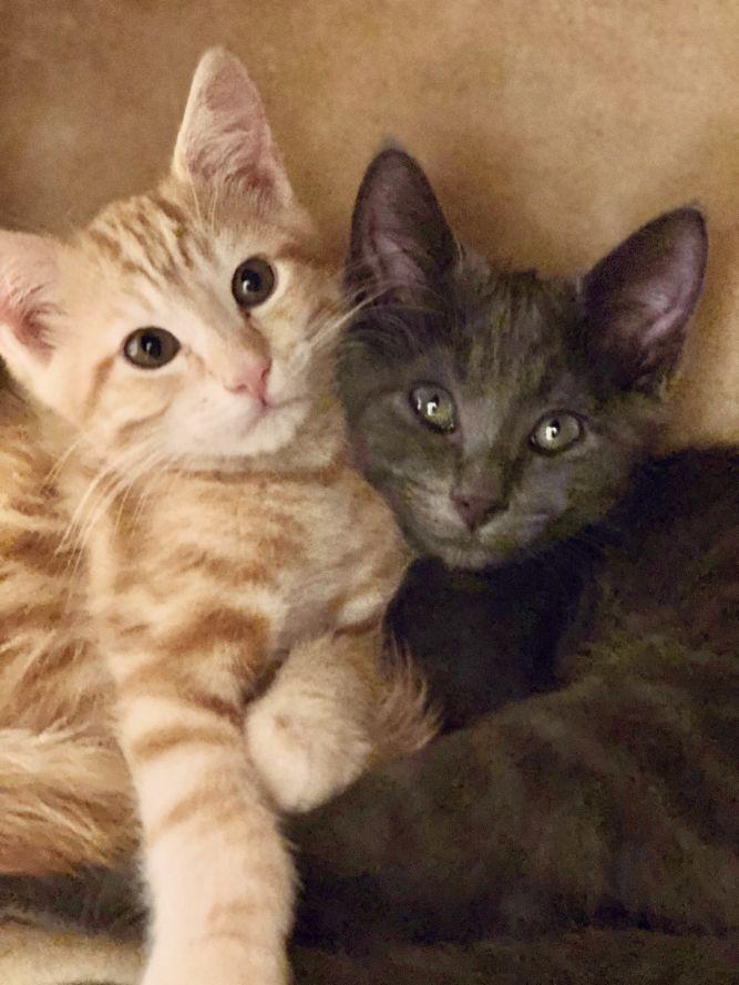 Oliver and Nigel