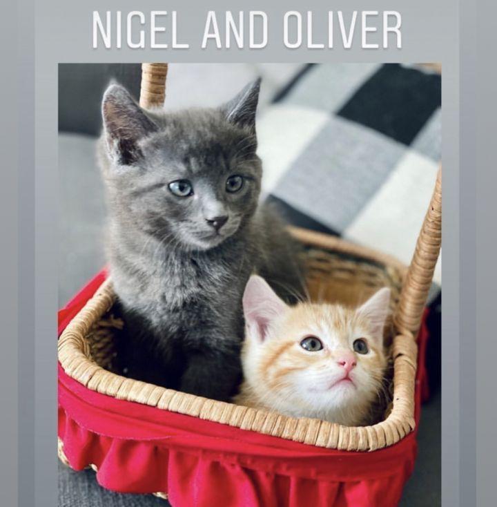 Oliver and Nigel 4