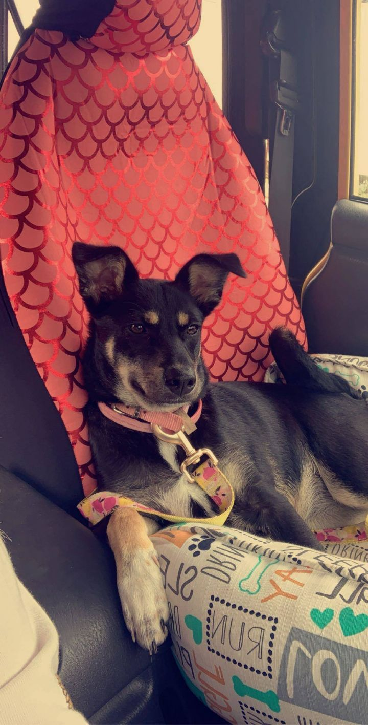 Joan, an adoptable Terrier Mix in Hudson, NH