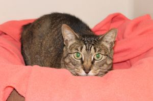 Tula is a sweet gentle four year old girl With her affectionate personality you would never guess