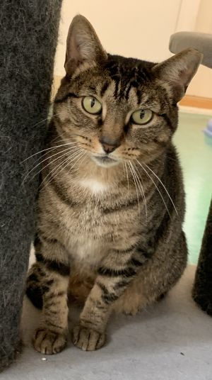 Tula is a sweet gentle four year old girl With her affectionate personality y