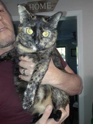 Cats For Adoption Near Bristol Ct Petfinder