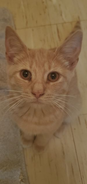 Im baby Huey a former street kitty born on March 10th I have a very stoic and calm nature and