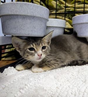 If you would like to adopt a pet please visit us at any of our adoption sites during regular busine