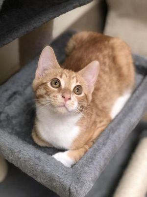 Duncan - kitten!
