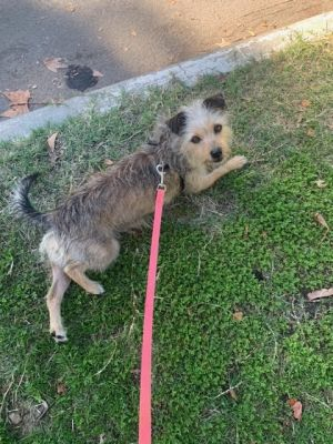 Breed Terrier mix Age 5 yrs Weight 14 lbs Good with dogs yes Good with cats unsure Good with