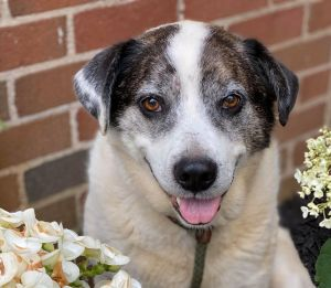 Meet Chase an adorable 5-year-old mixed breed dog who weighs about 50 lbs We d