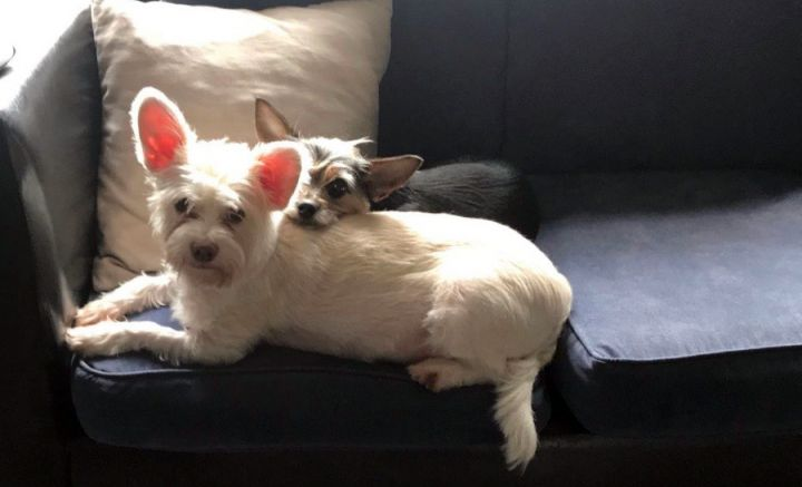 Coco and Daisy BONDED PAIR 2