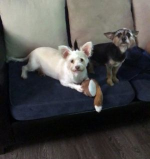 Coco and Daisy BONDED PAIR