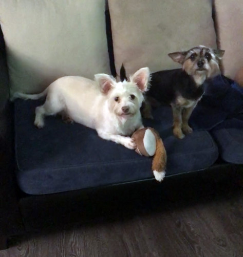 Coco and Daisy BONDED PAIR 1