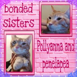 Pollyanna  Penelape are sweet 8 month old rescued cats They want to be hold purr and would make a