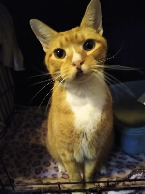 Kitty Flynn was surrendered to the city shelter He has proven to be a delight He needs a little mo