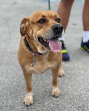Lexy was surrendered to Harris County Animal Control along with her friend Lacey They belonged to a
