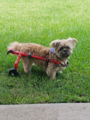 You can fill out an adoption application online on our official websiteAll dogs listed here are ava