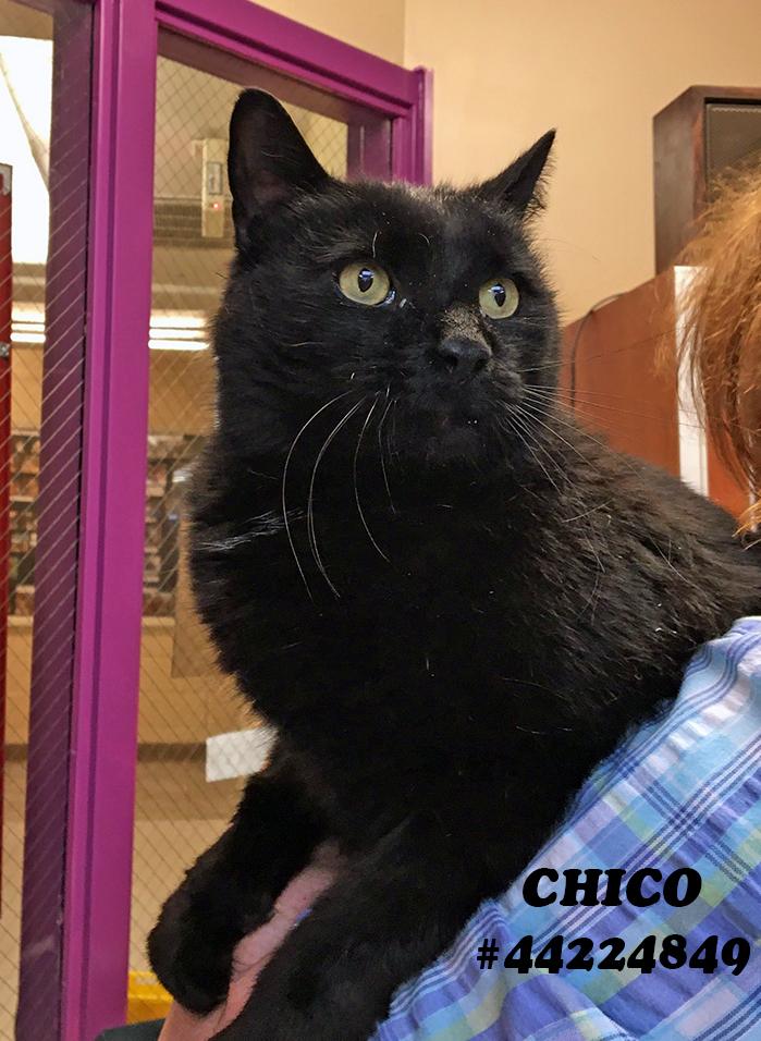 Chico 1