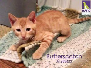 Butterscotch is in foster care Email BARCFosterhoustontxgov to meet her and h