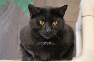 Miranda Bailey was found as a pregnant stray before she came into our care Her babies have grown up