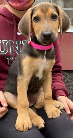Meet me in Patterson NY by appointment Meet our Steel Magnolias pups they have soulful eyes are