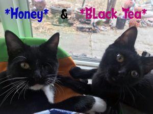 """Black Tea """"bonded with Honey"""""""