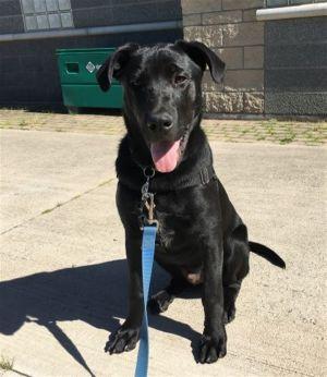 ?bust=1594324753&width=300 - Adopt a Dog
