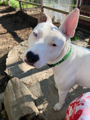 Who is this incredibly handsome boy  Meet Tristan Tristan is about two years old neutered and