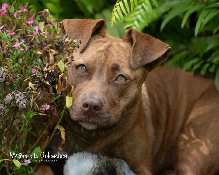 Piper*HW Positive, Foster to Adopt* 1