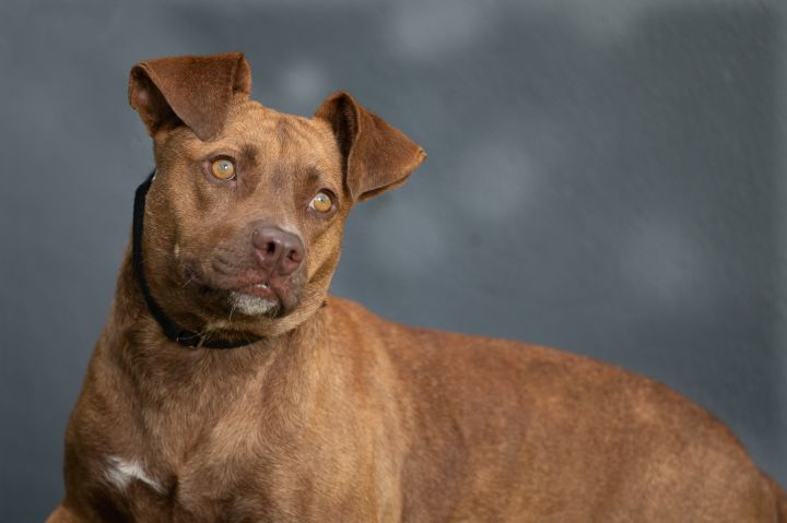 Piper*HW Positive, Foster to Adopt* 2