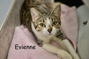 Evienne