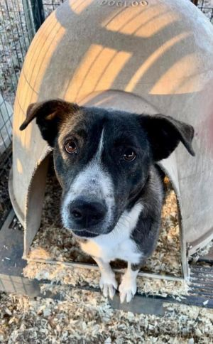 Mary is a sweet and a reserved dog Mary is approx 6-8 months old 72020 Border Collie mix She is