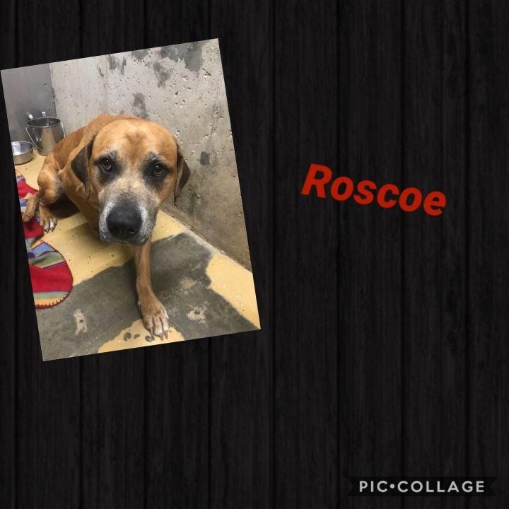 Roscoe 2