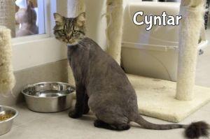 Cyntar