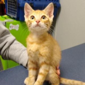 Me and my siblings are here at the shelter to find a new home We would like to meet youstop