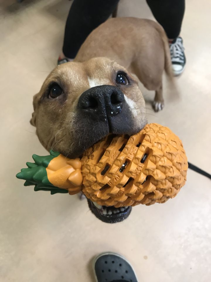 Zoey, an adoptable Mixed Breed in Walden, NY