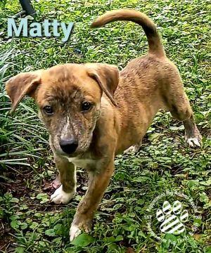 Matty ADOPTION PENDING