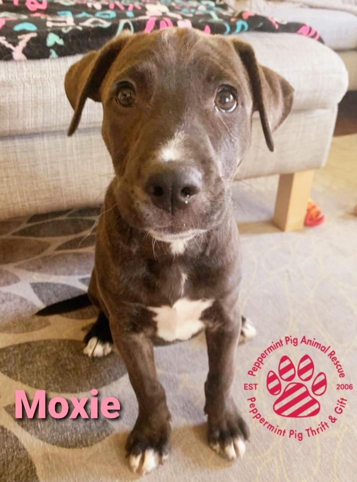 Moxie ADOPTION PENDING 1