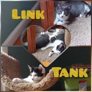 Link and Tank  - in foster care