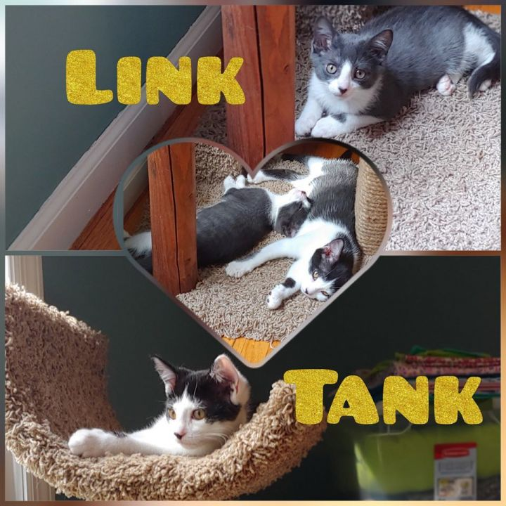 Link and Tank  - in foster care 1