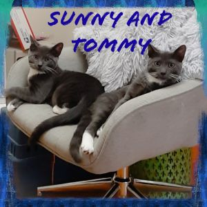 These gorgeous grey brothers Sunny and Tommy are not only adorable  and handsome they also darling