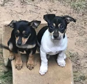 Little G and Louis (Bonded Pair)