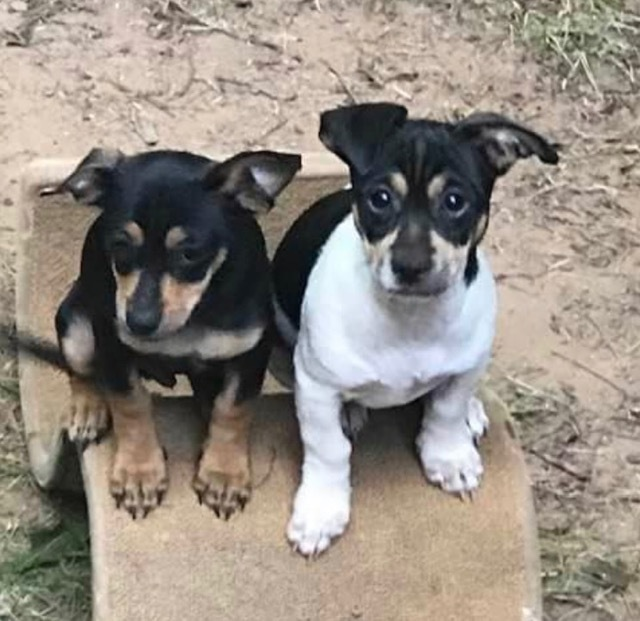 Little G and Louis (Bonded Pair) 1