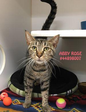 Abby Rose