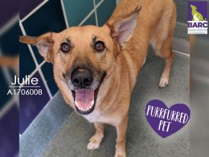 Beautiful Julie is the total package She is very sweet and affectionate and just wants to be near y