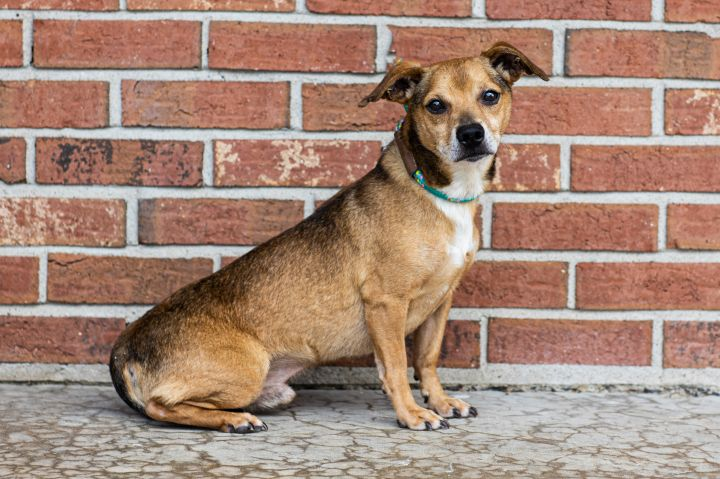 TANNER, an adoptable Mixed Breed in Cape Girardeau, MO