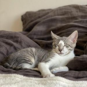 Meet Frankie-hes 3-months-old and looking for a home Frankie is being fostered with his brother Ma