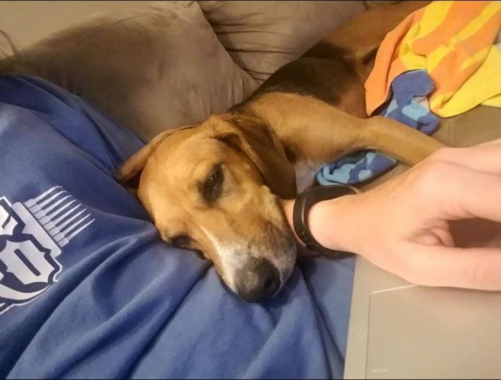 Marley, an adoptable Hound in Manhattan, KS