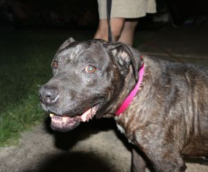 Hello my name is Ella Fitzgerald and I came into Cuz i Matter Animal Rescue on 6132020 I am a